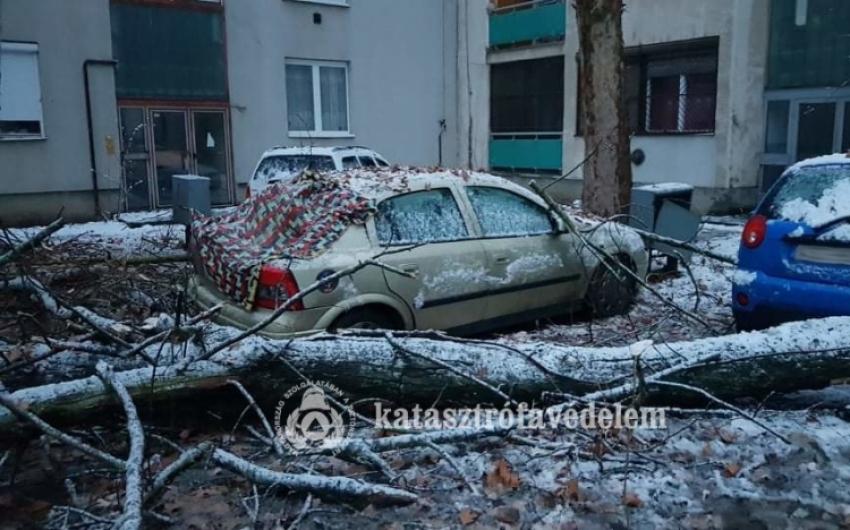 Autókra dőlt egy fa Tiszafüreden
