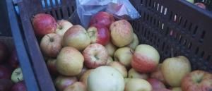 Karcagon még tartja az árát az alma