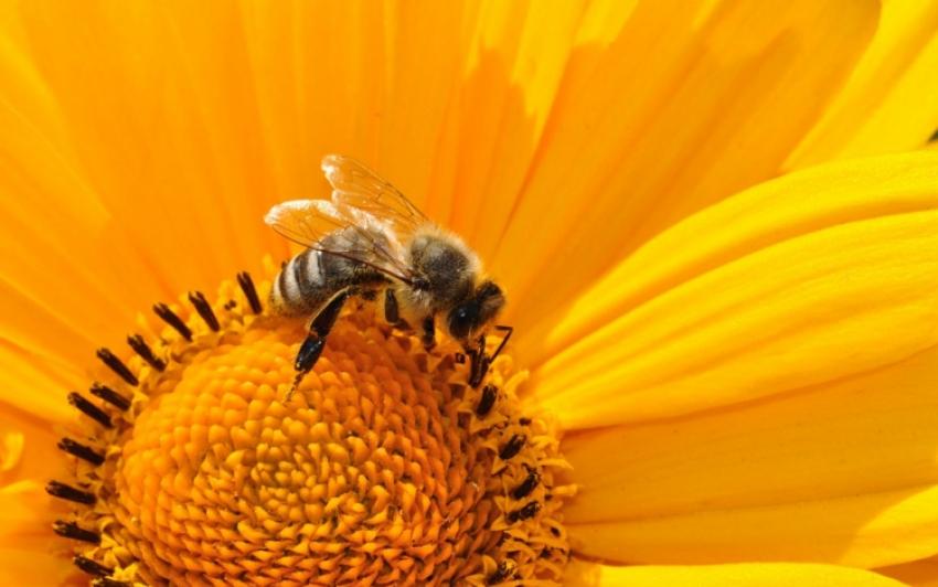Összegyűltek a magyar aláírások a méhek megmentését célzó európai kezdeményezéshez